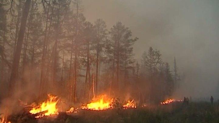 Площадь лесных пожаров в Якутии сократили