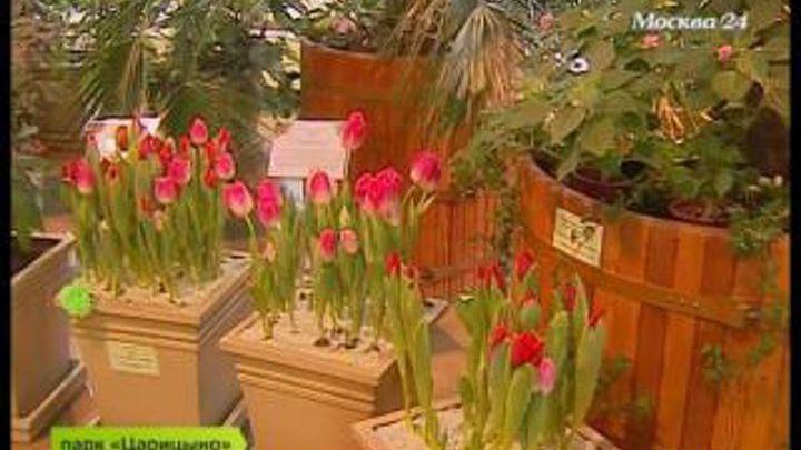 Порноха тюльпанов 4 сезон