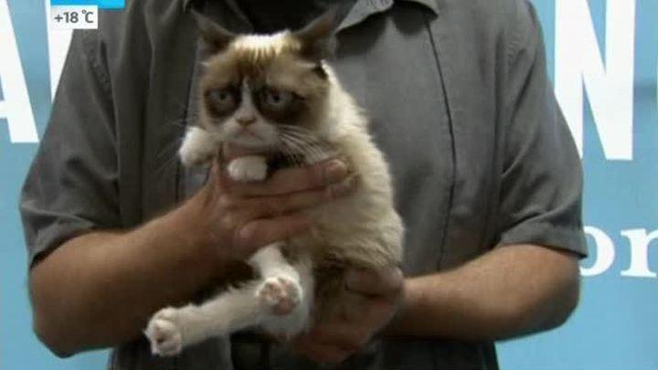 Рецепт успеха: самая угрюмая кошка в мире выпустила уже вторую книгу