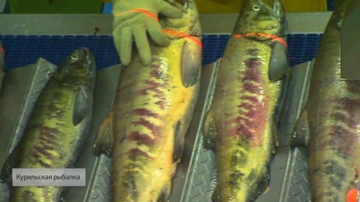 Курильская рыбалка. Специальный репортаж Артема Ямщикова