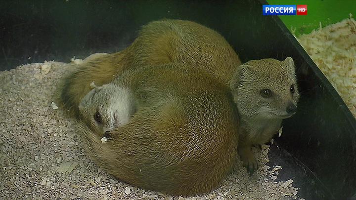 Вести-Москва. Эфир от 07 июля 2015 года (11:35)