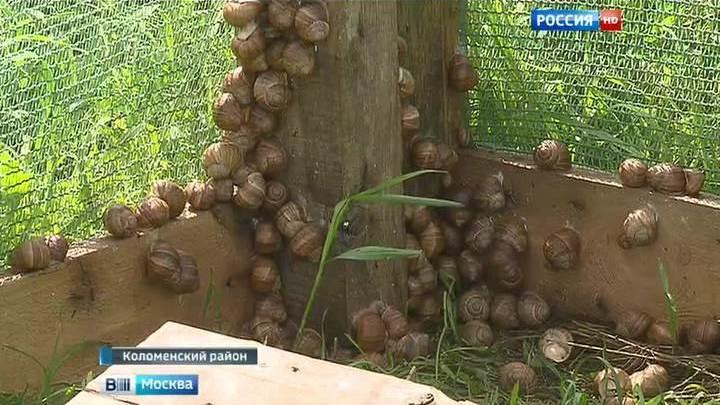 ферма по разведению улиток Новоясеневская сесть