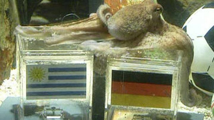 Осьминог-оракул отдал третье место Германии