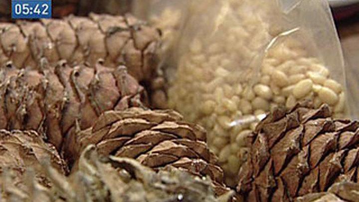 Китайская горчинка испортила кедровые орехи