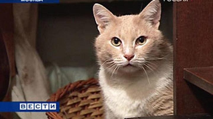 Москвичка собрала 117 кошек в однокомнатной квартире
