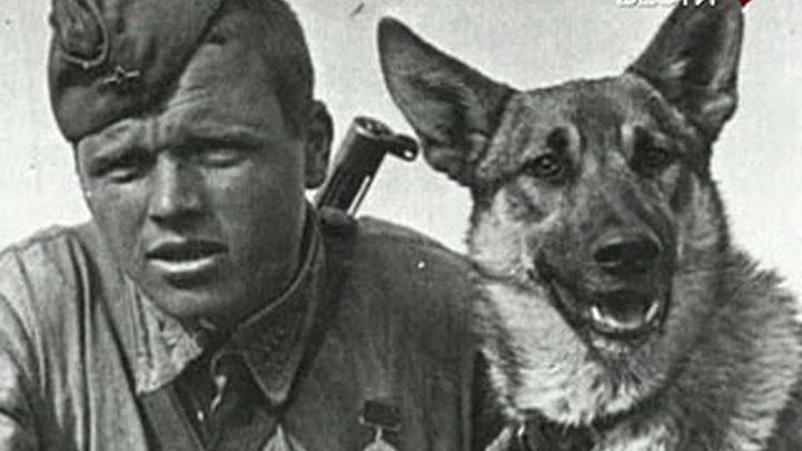 Собаки специального назначения