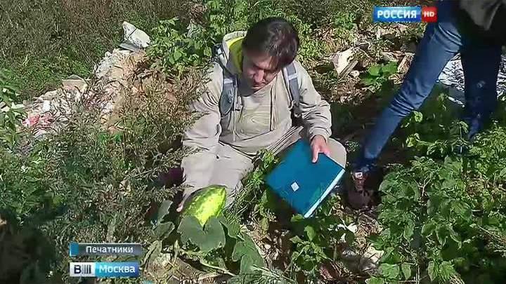Мутанты на свалке: москвичей встревожили гигантские кабачки и помидоры