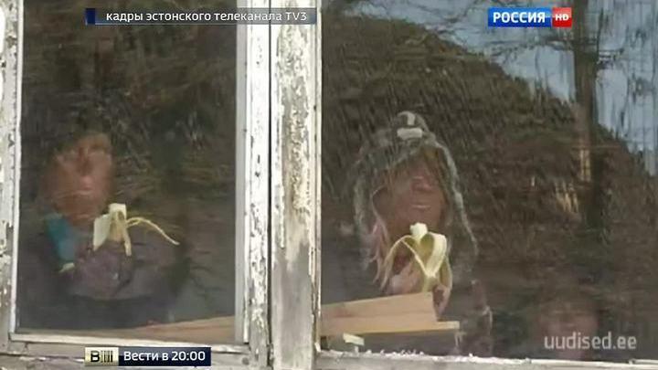 Учения эстонских спасателей: поджог общежития и поедание беженцами бананов